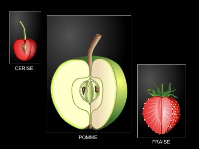 Fruits simples et complexes