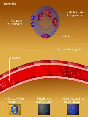 encyclopedie medicale diabete