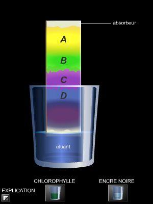Encyclop die larousse en ligne chromatographie - Animation chromatographie sur couche mince ...
