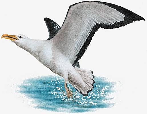 oiseaux d'une plume datantAbuja site de rencontre au Nigeria