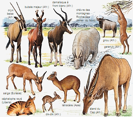 encyclopedie larousse animaux