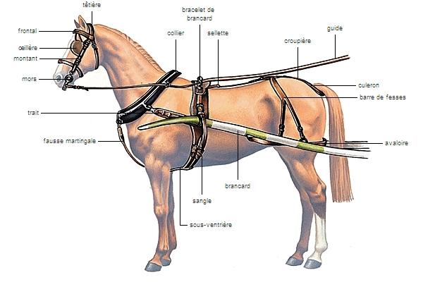 cheval de trait equipement