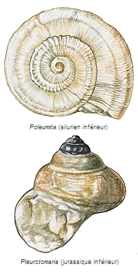 Gastropodes fossiles