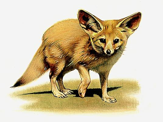encyclopedie renard