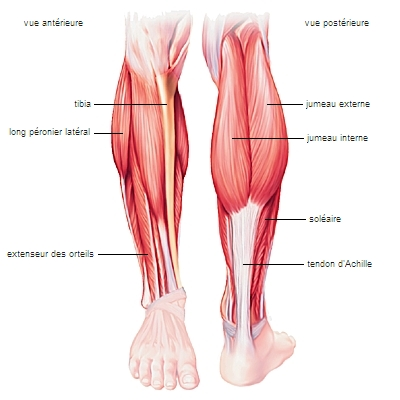 érysipèle jambe photo