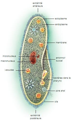 Les parasites aux yeux de la personne traiter le traitement comme