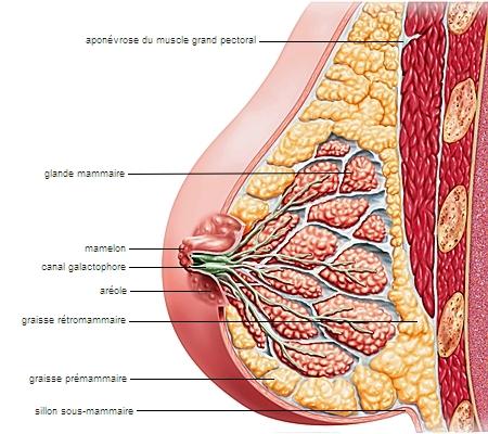 Dbut grossesse et taux de progesterone bas - Forum libre