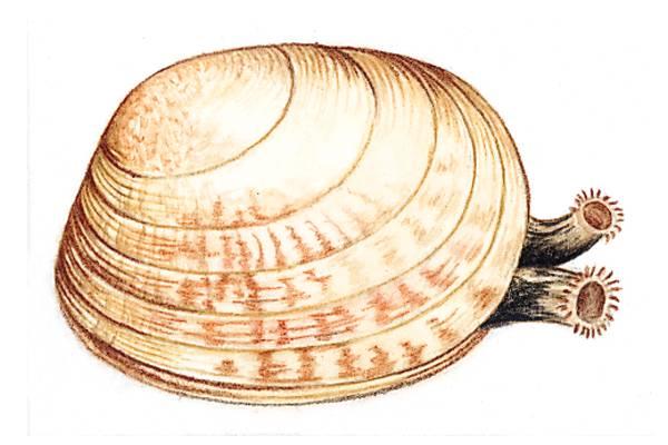 Encyclop die larousse en ligne bivalve for Passif synonyme
