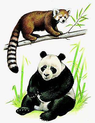 encyclop die larousse en ligne grand panda. Black Bedroom Furniture Sets. Home Design Ideas
