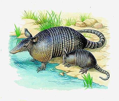 Quelle est la définit ion d'un Puma dans la datationnouveau site de rencontre australien