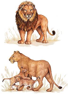 Très Encyclopédie Larousse en ligne - lion SR14
