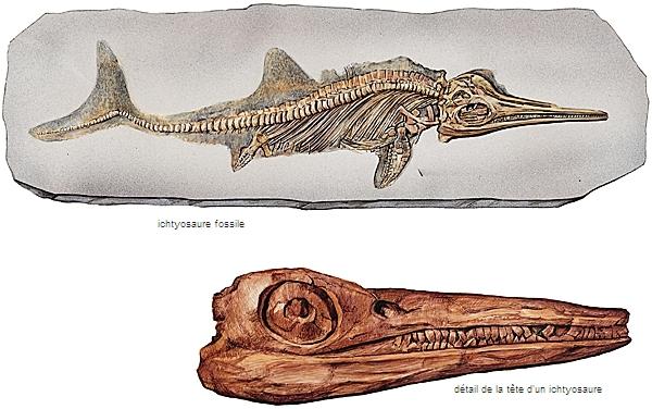 index des fossiles relatifs datant