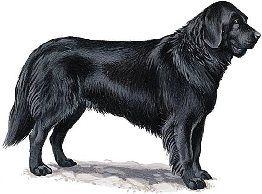 matin espagnol chien