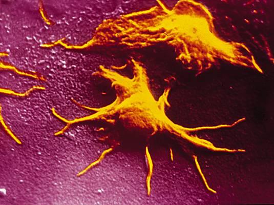 plaquette de sang