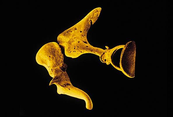 Encyclop die larousse en ligne oreille for Fenetre ronde oreille