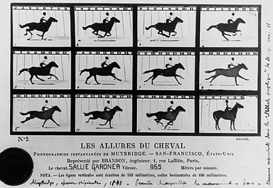 Edward Muybridge, les Allures du cheval