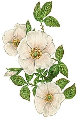 encyclopedie fleurs