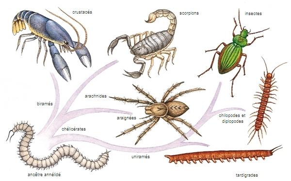 Les Animaux Arthropodes