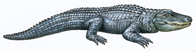 Cri de crocodile