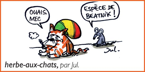 Herbe-aux-chats, par Jul