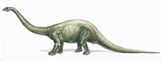 Encyclop die larousse en ligne diplodocus du grec dokos - Dinosaure diplodocus ...