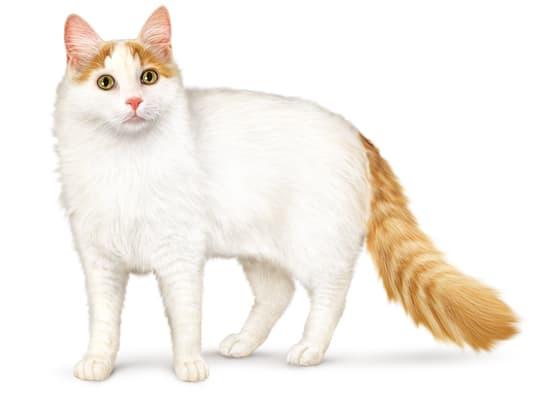 propagation chatte rasée