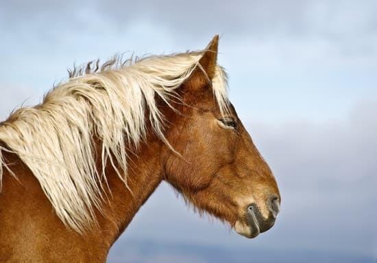 Cheval Tete encyclopédie larousse en ligne - tête de cheval