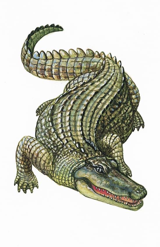 encyclopedie larousse crocodile