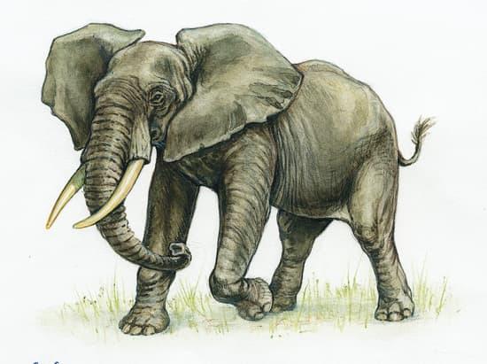 question sur l'éléphant 1312075-%C3%89l%C3%A9phant_dAfrique