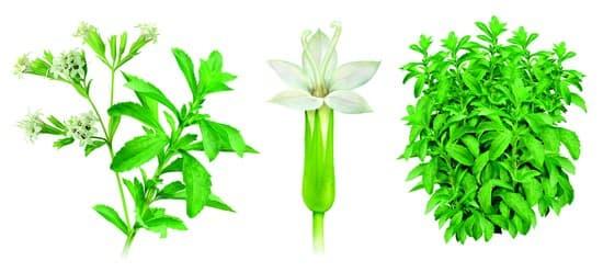 encyclop die larousse en ligne stevia. Black Bedroom Furniture Sets. Home Design Ideas