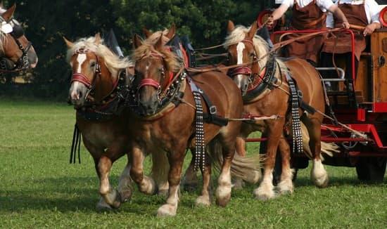cheval de trait allemand