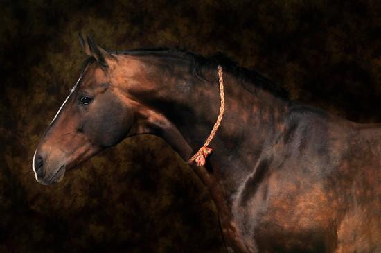 Encyclop die larousse en ligne cheval - Dessin tete de cheval ...