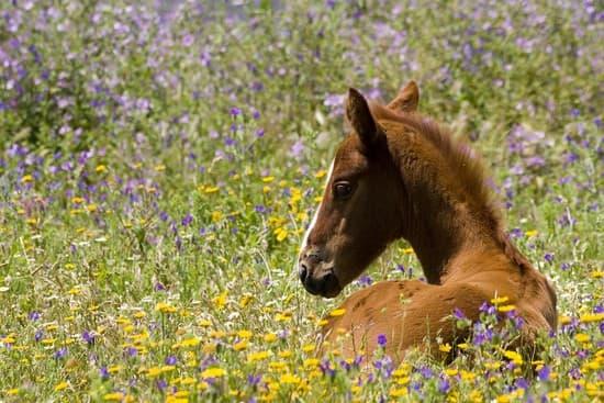 S'occuper du quotidien des chevaux