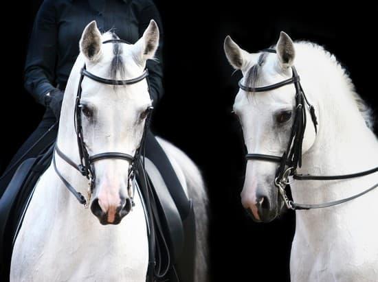 Encyclopédie Larousse en ligne - Recherche   vie dun cheval ... 091192ed1d2