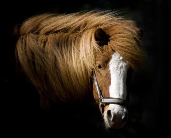 Encyclop die larousse en ligne t te de cheval - Image tete de cheval ...