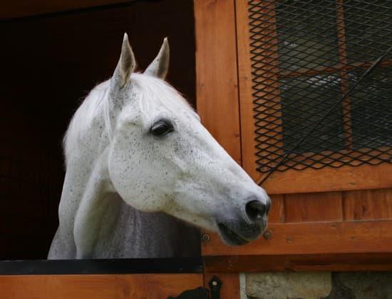 image cheval box