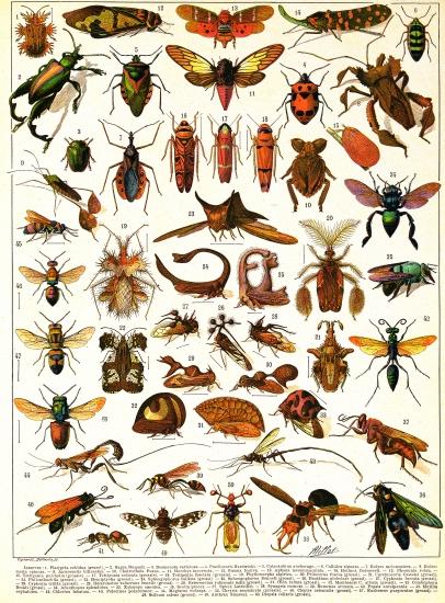 encyclop die larousse en ligne insectes. Black Bedroom Furniture Sets. Home Design Ideas