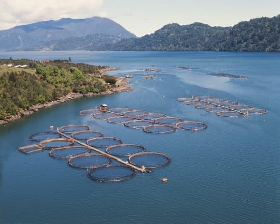 Encyclop die larousse en ligne aquaculture for Tipos de estanques para acuicultura