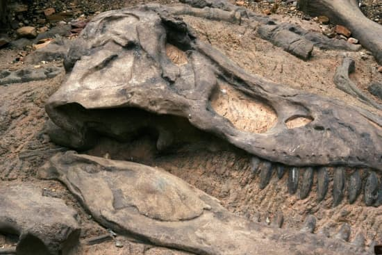 Encyclop die larousse en ligne dinosaure - Dinosaure marin carnivore ...