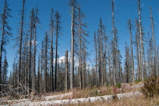 Encyclop die larousse en ligne for t ancien fran ais forest du bas latin silva forestis for t - Tuer un arbre avec de l acide ...