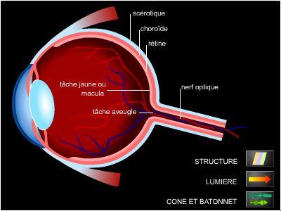 tomographie par cohérence optique